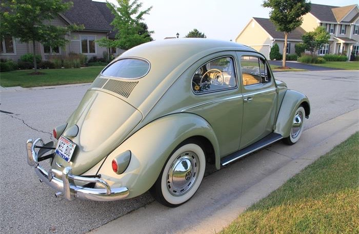 beetle pic 2