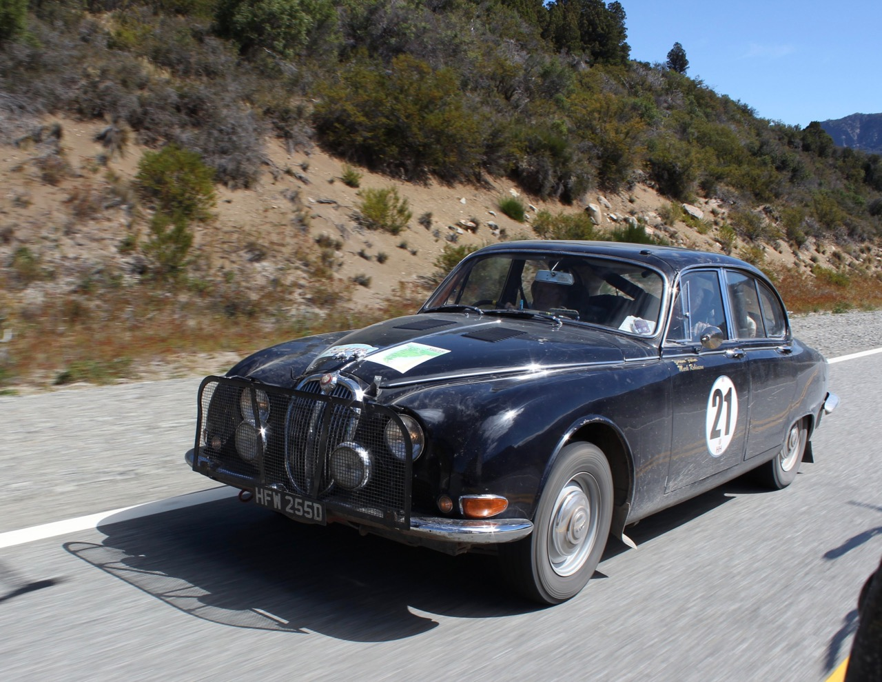 A Jaguar in pavement in South American event