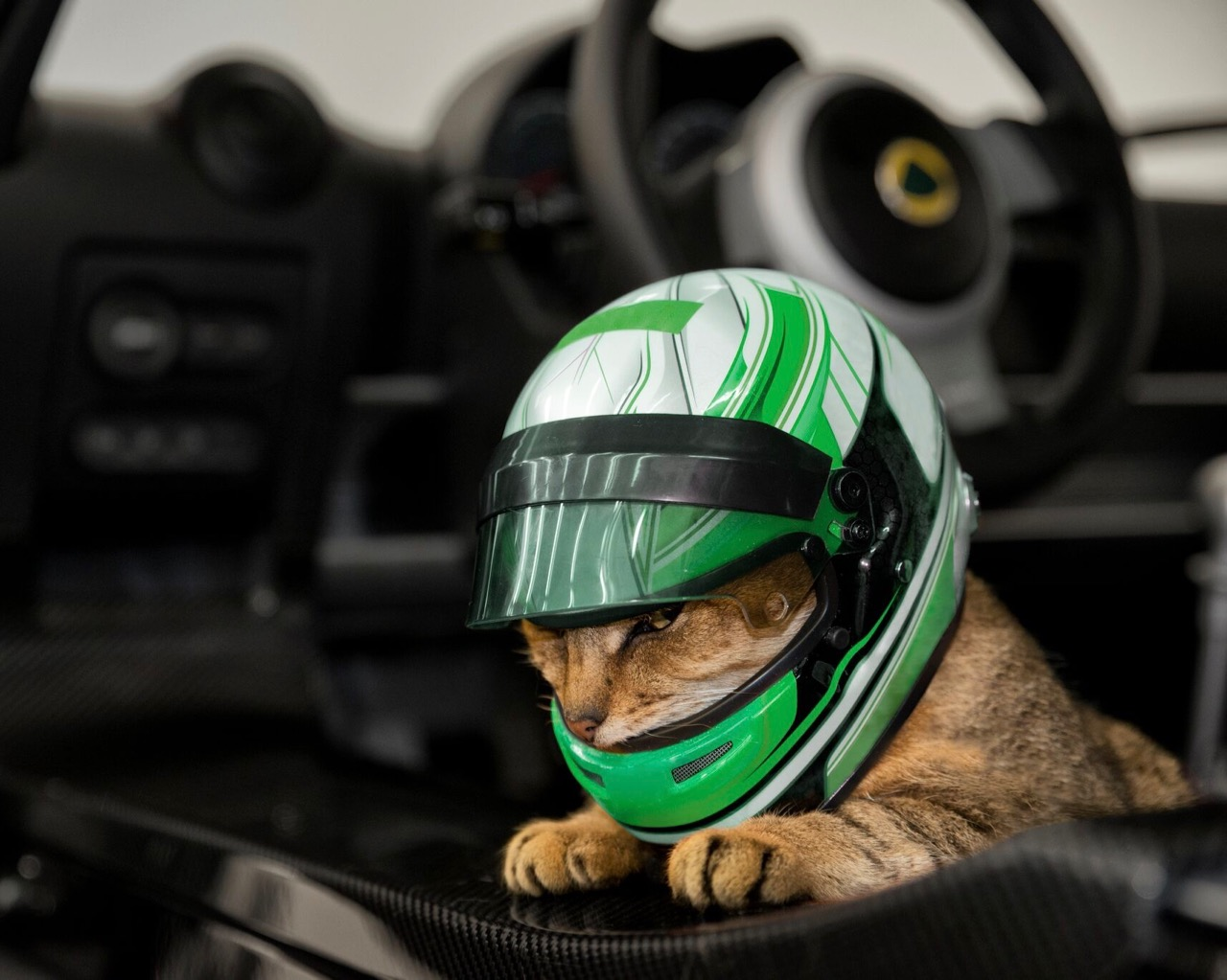 Cat's ready to ride in a Lotus