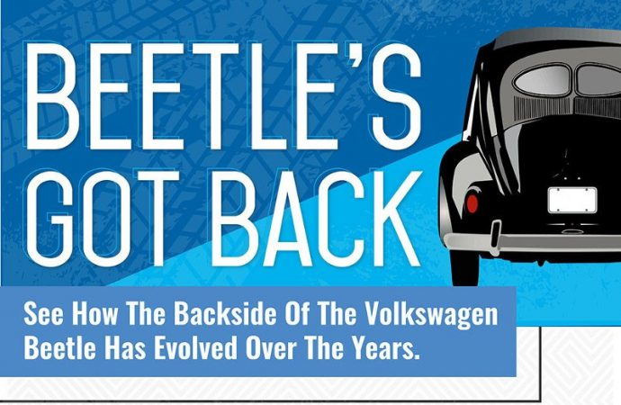 Beetle's backside tells story of the Bug's evolution