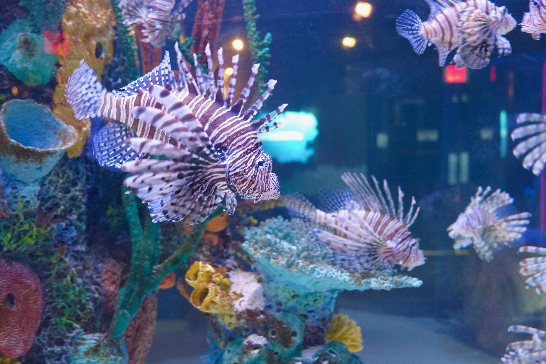 Go Fish! Car show at aquarium makes a big splash
