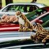 Jaguars pounce on showcase at Beaulieu