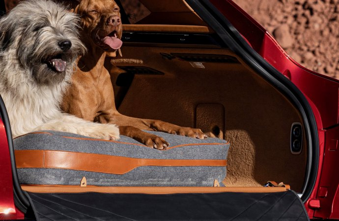 Is Aston Martin going to the dogs?